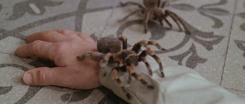 the beyond spiders fulci.png