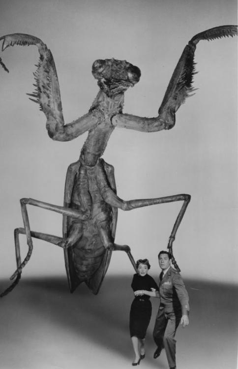 deadly-mantis-1957.jpg