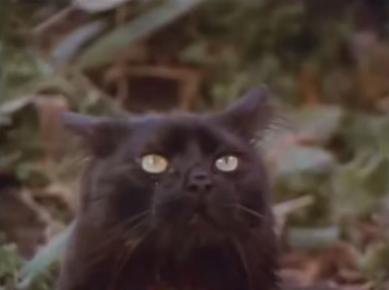 Mas-negro-que-la-noche-Mexican-horror-film-1975