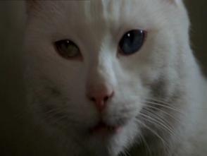 white-cat-nurse-adams-the-legacy-1978
