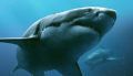 In-the-Deep-2016-sharks-poster-detail