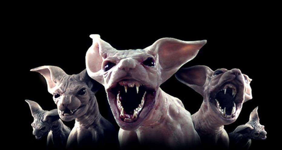 moggy creatures  u2013 usa  2017  u2013 horrorpedia