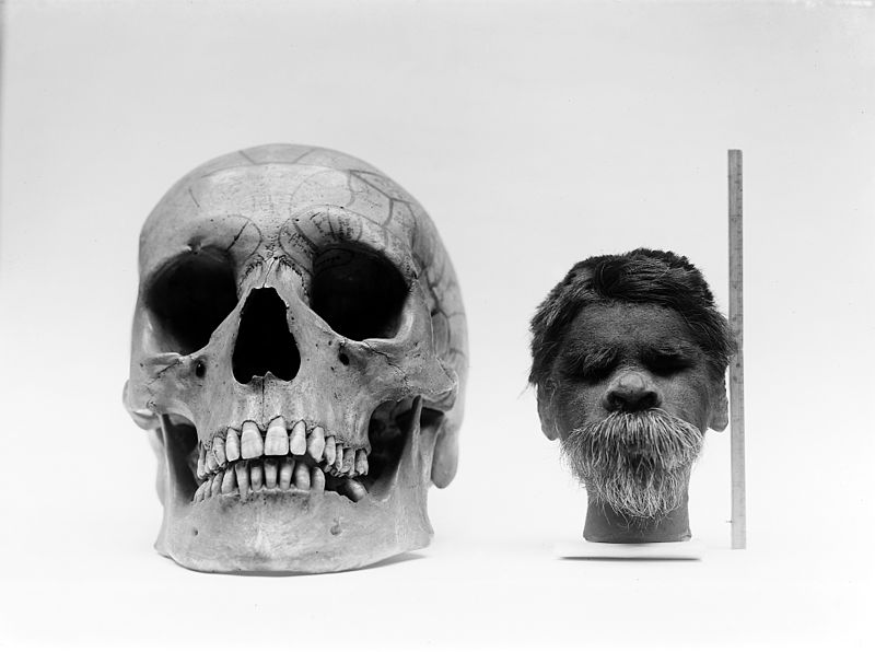 Shrunken_head_compared_with_normal_human_skull._Wellcome_M0003687mrhorrorpedia